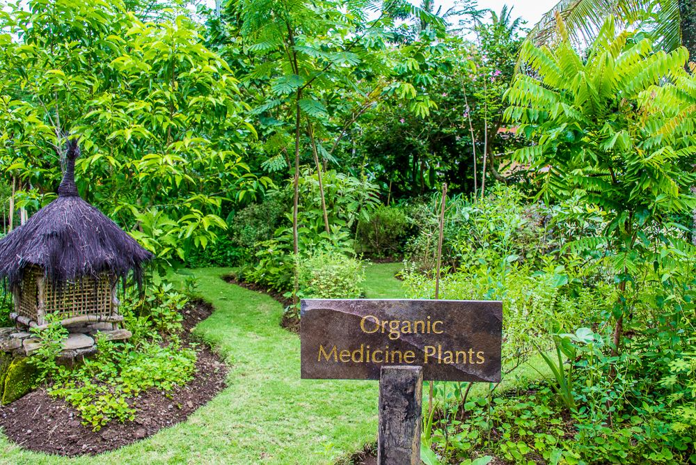 Organic garden at Fivelements, Ubud, Bali, Indonesia.