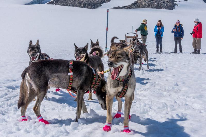 dog-sled camp on Alaska glacier