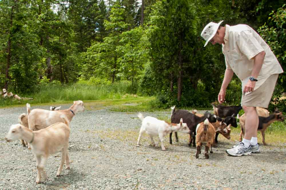 a self-guided press trip in Oregon at a farm with pygmy goats
