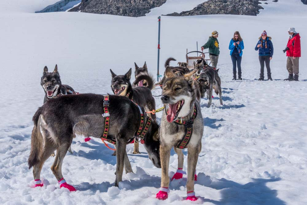 who would think a press trip would land you on a glacier at a dog-sled camp?